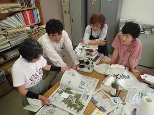 plant specimen 1.JPG