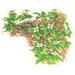 北アルプス誕生とそこに息づく高山植物のものがたり<small>- 花、果実、種子、芽生え、ときどきふしぎ発見! -</small>